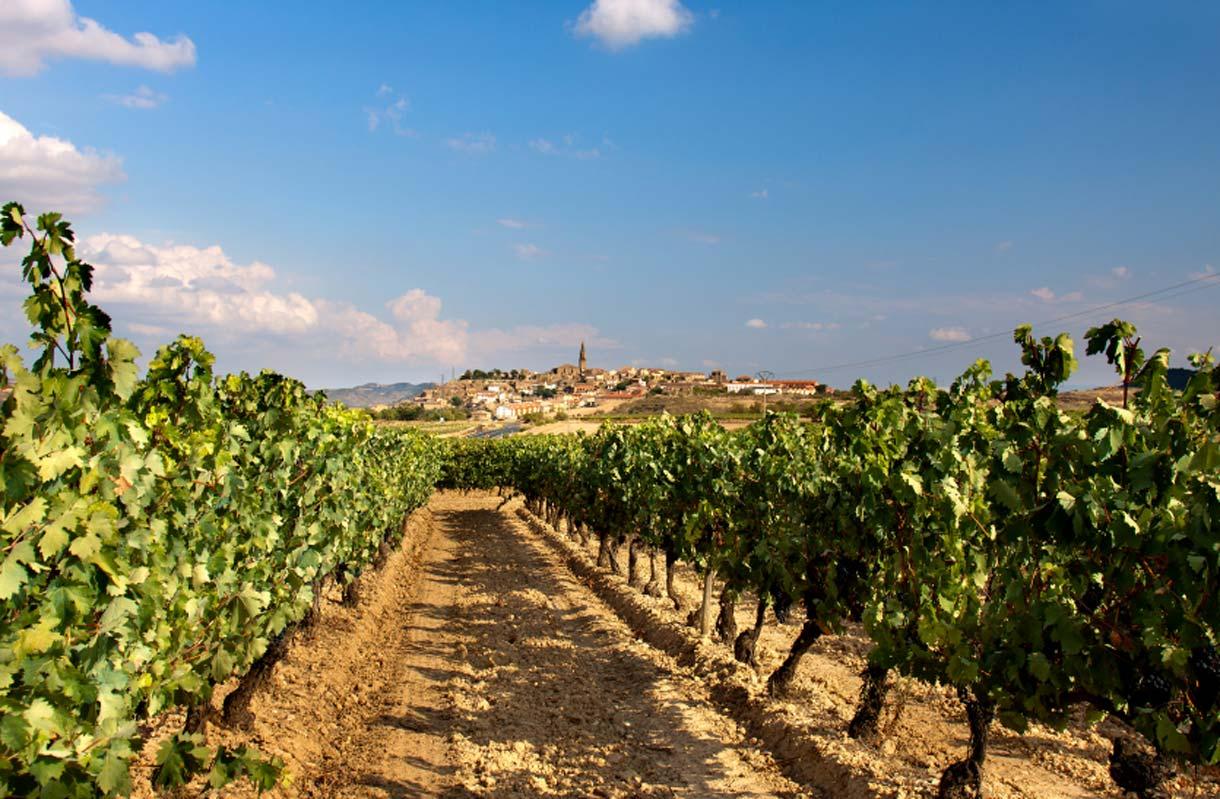 Espanjan lomaan kuuluu olennaisena osana ruoka ja viini
